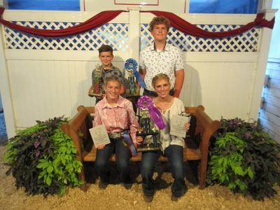 HCF more sheep show winners 2