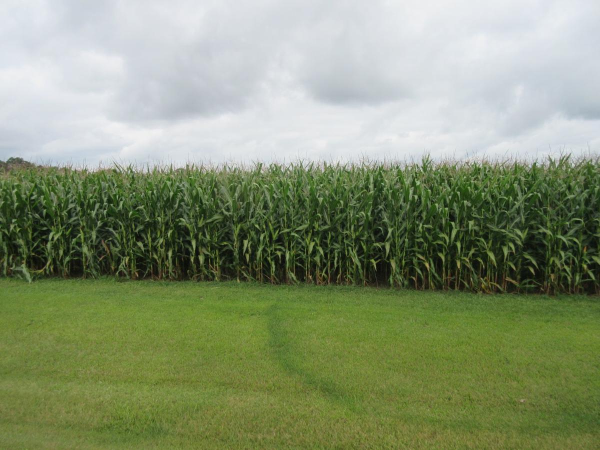 harvest photo I