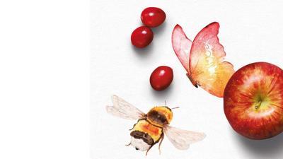 BPT pollinators