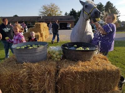 lily creek farms fall fest pic