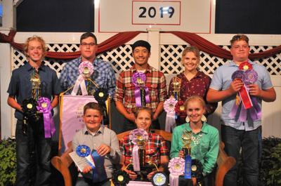Beef show winners