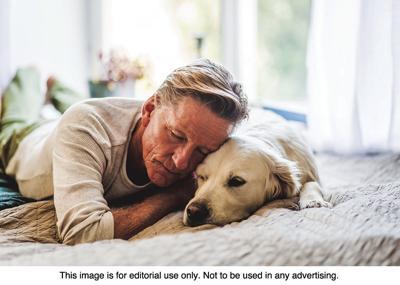 MCS pet benefits