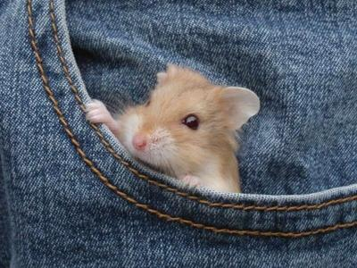 hamsterinpants