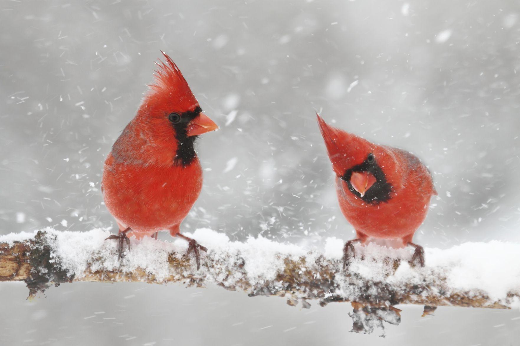 Como los humanos, no todos los pájaros se aparean para la vida | Estilo de vida | crowrivermedia.com