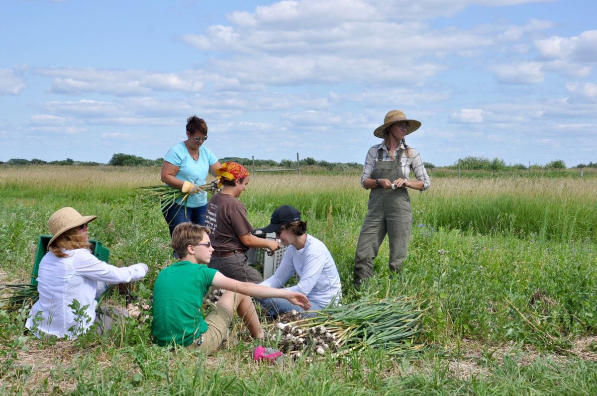 Volunteering for the harvest