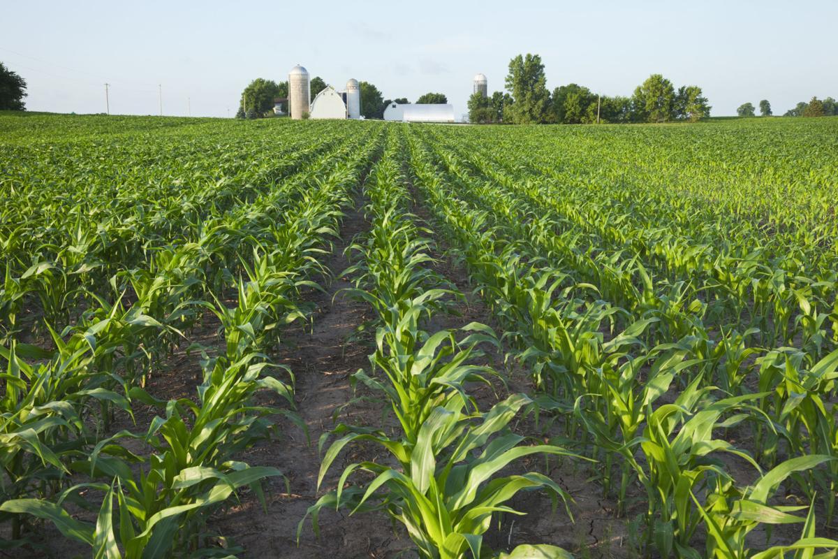 Minnesota farm