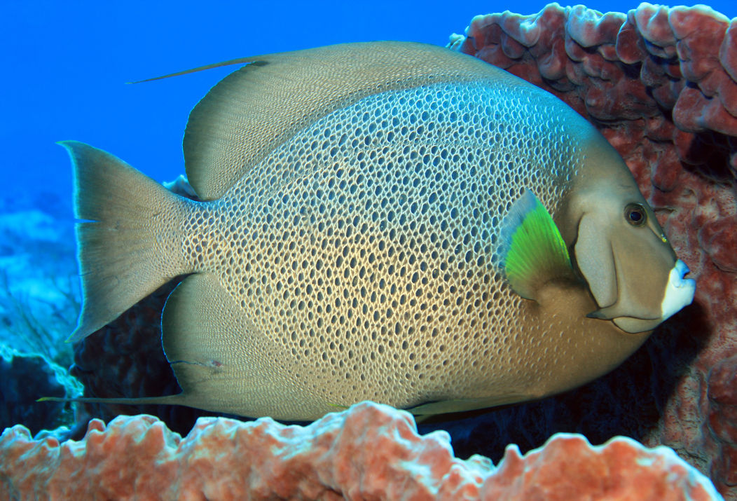 John pennekamp coral reef state park boundaries in dating