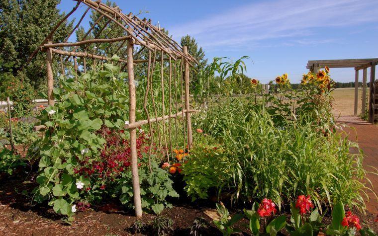 carver scott county teaching garden - Garden Fever