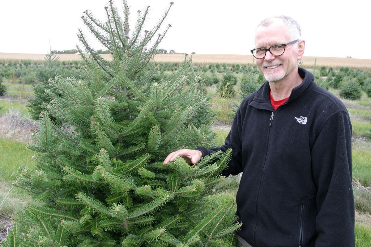 Man Believes In Real Christmas Trees Lifestyle Crowrivermedia Com