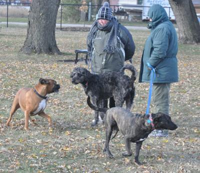 Dogs get friendly at new dog park
