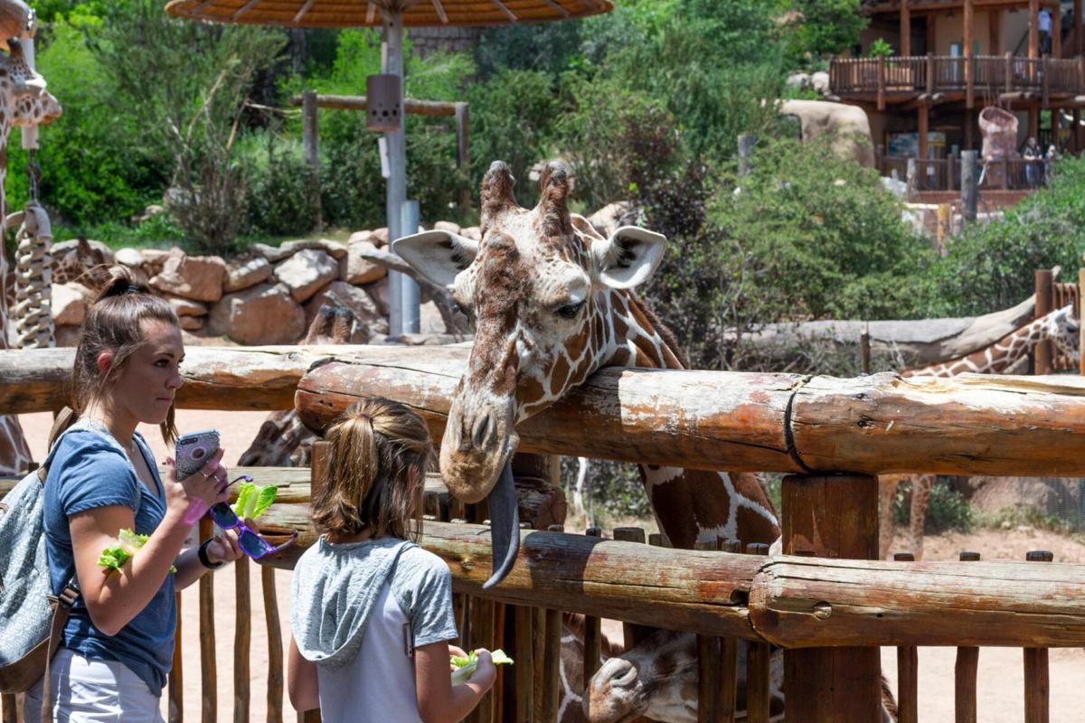 zoo4_bryan-grossmanCC