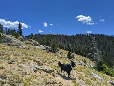 Hiking Bob: Road trip hike — St. Charles Peak