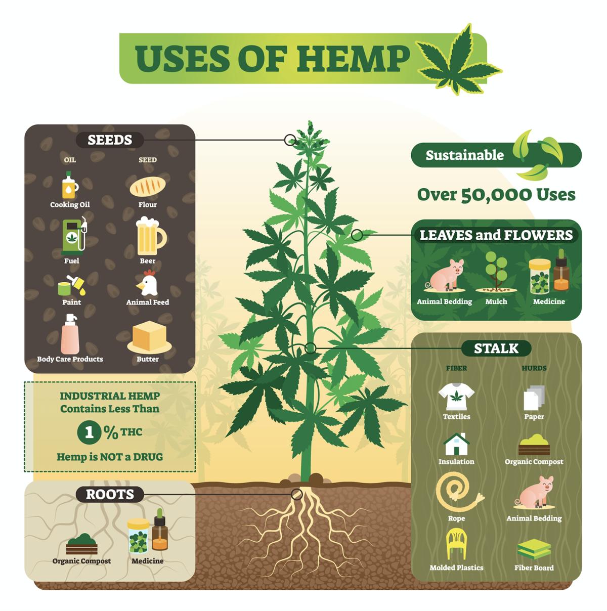 Hemp, uses, marijuana, cannabis, sustainable