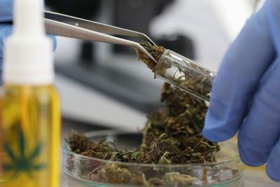 Cannabiz: Colorado MED Bridges hemp and cannabis industries, more