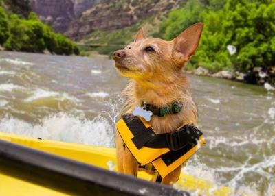 Bryan's Dog, outdoors, rafting, kyak
