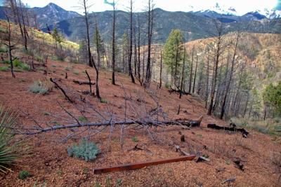 Waldo Canyon off limits to public for foreseeable future