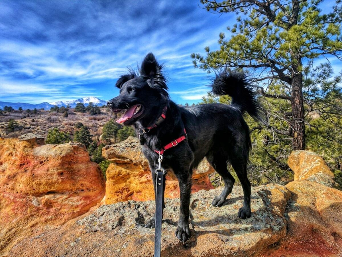 90 days with man's best hiking companion