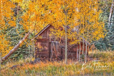 Fall Colors and shed