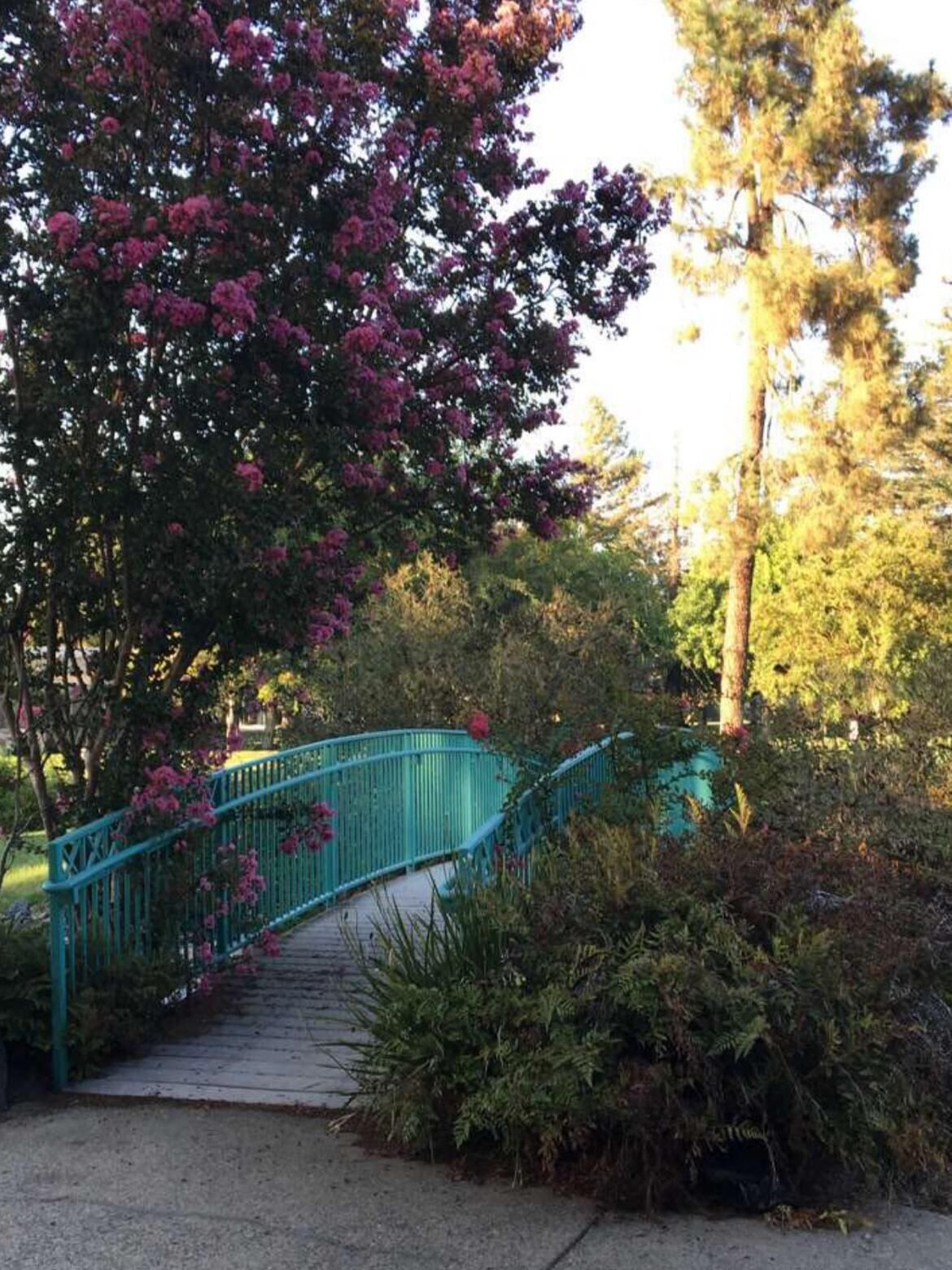 Village Lake Bridge