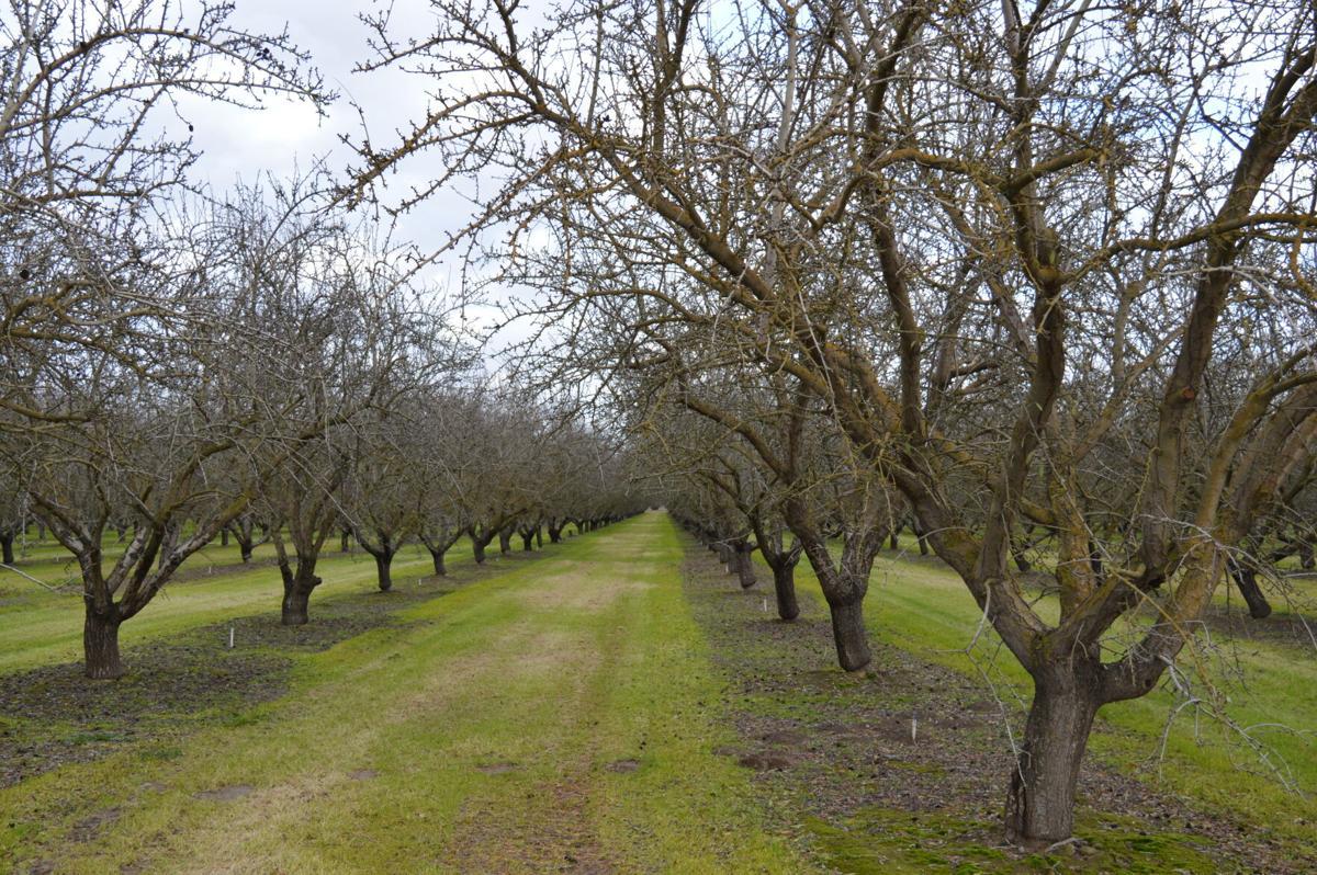 Turlock's Orchards