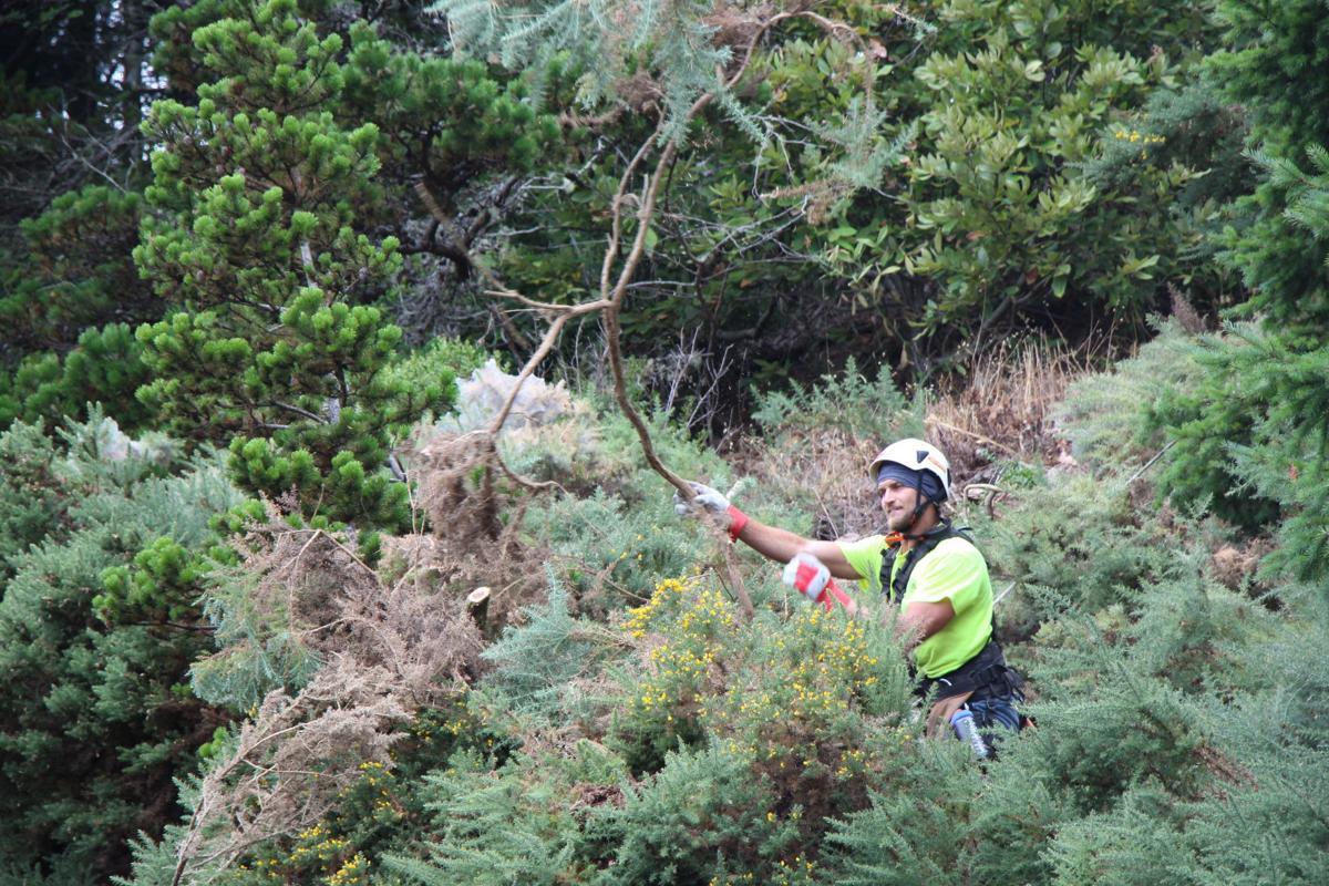Cliff Weeds PHOTO 2.JPG
