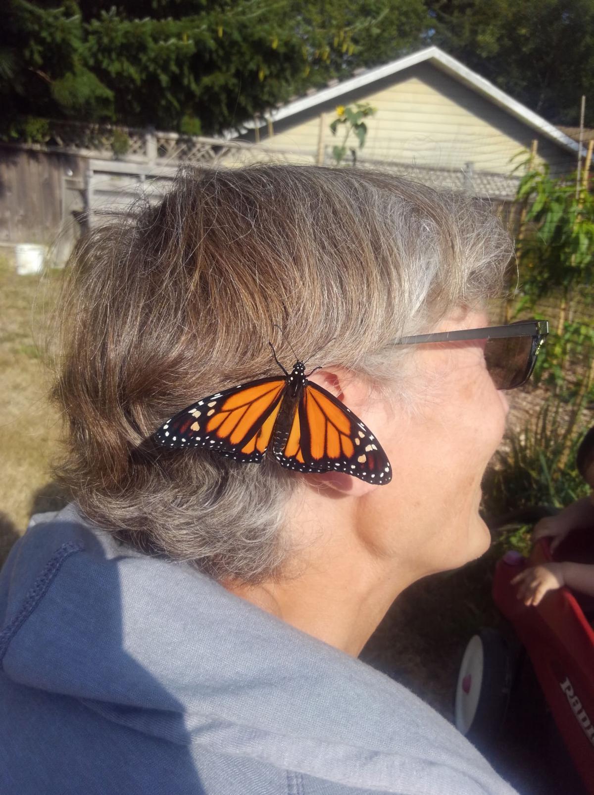 Butterfly in Hair