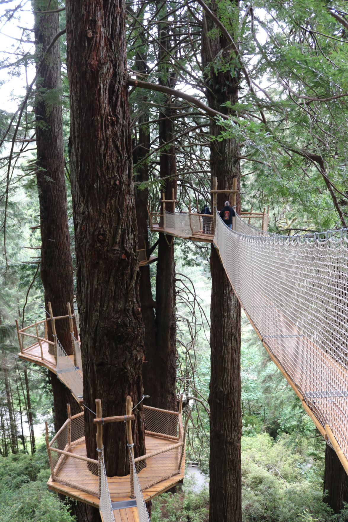 Picture of: Redwood Canopy Trail Now Open At Trees Of Mystery News Paid Currypilot Com