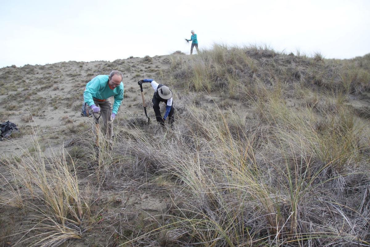 Tolowa Dunes Stewards