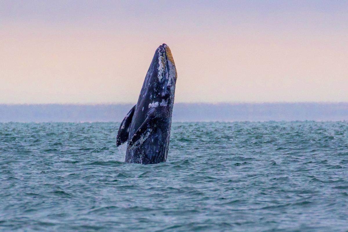 Whale Rising