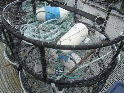 Whale Entanglements