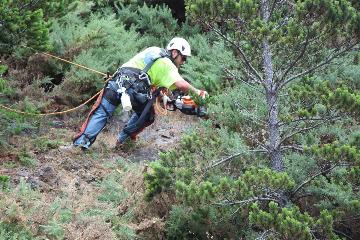Cliff Weeds PHOTO 1.JPG