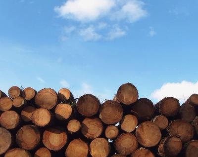 Timber Court Ruling