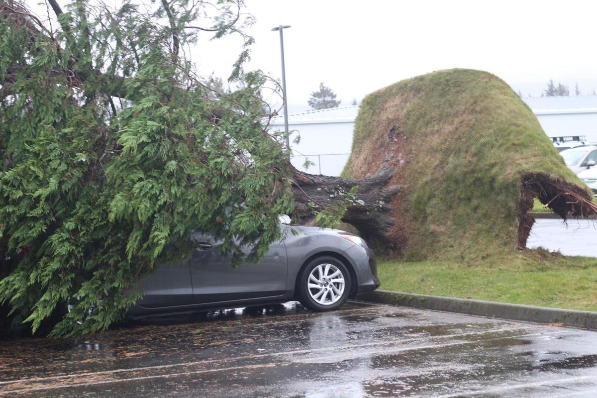 Parking Lot Tree Falls