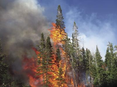 Stop wildfires