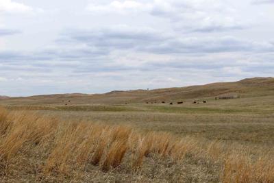 Sandhills range Gudmundsen Ranch hills pasture May 2019
