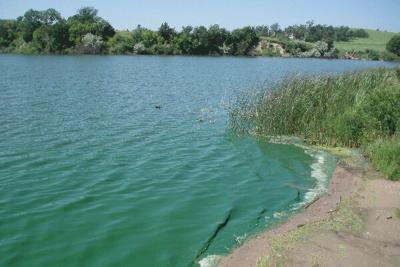 Blue green algae toxic Nebraska Extension