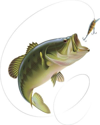 Metro Bass Photo