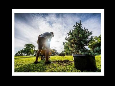 Black Hills Energy safety call before you dig tree August 2020