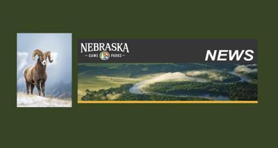 Nebraska Game and Parks NG&P Big horn sheep news