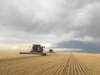 Wheat harvest Pete Miller Farm Lodgepole Nebraska