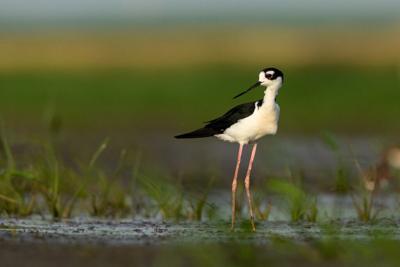 Wetlands bird Nov 2020