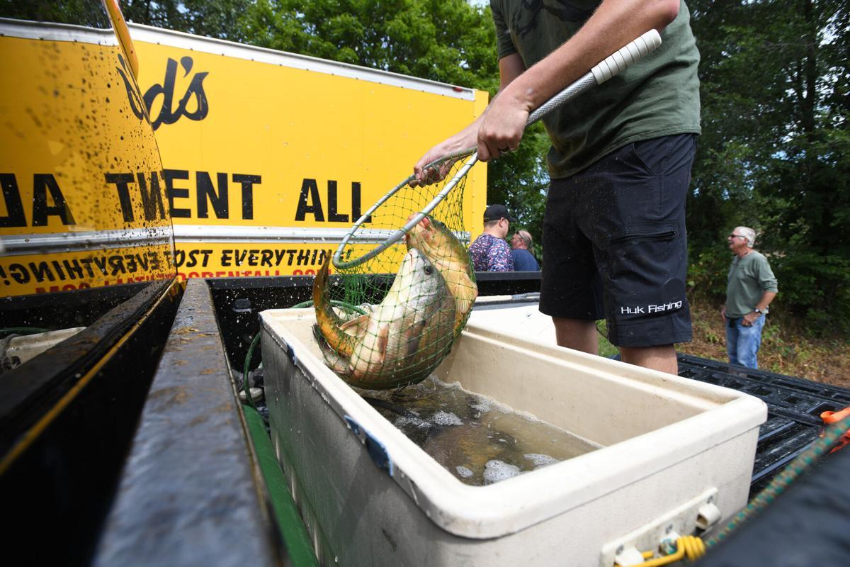 Fishing Derby fish shocking