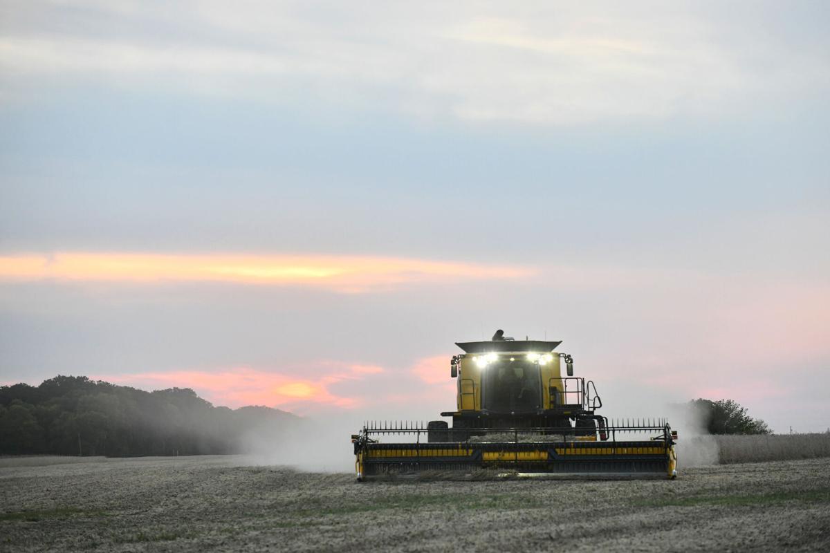 Harvest 2021 - wider angle
