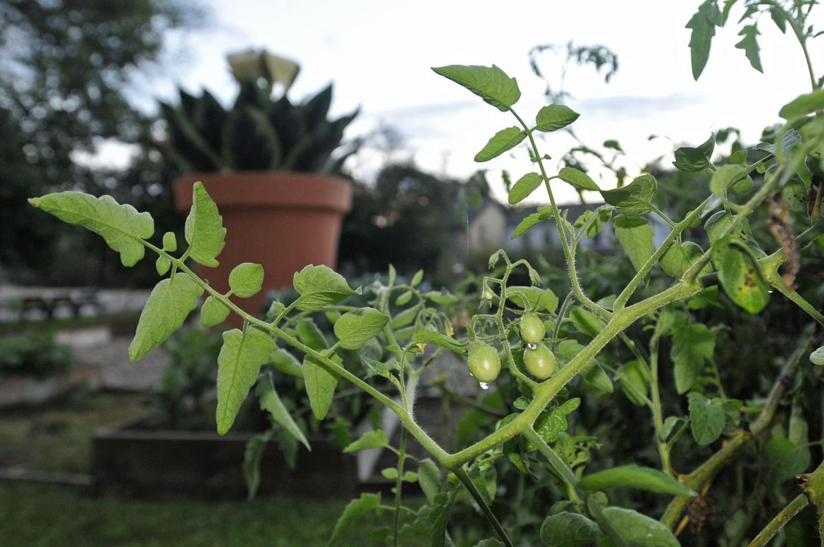 fifth avenue community garden - How To Start A Community Garden