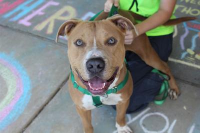 Dog at Kankakee County Humane Foundation