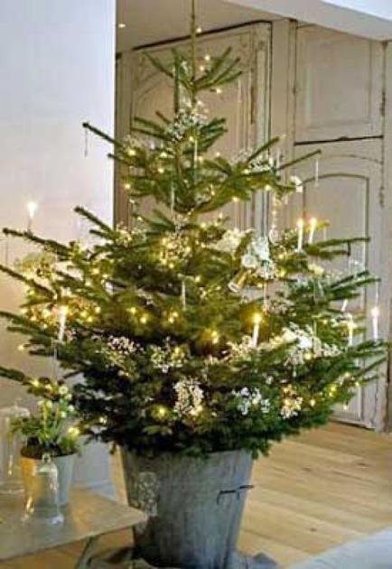 planning on a live christmas tree home garden daily journalcom - Live Christmas Trees For Sale