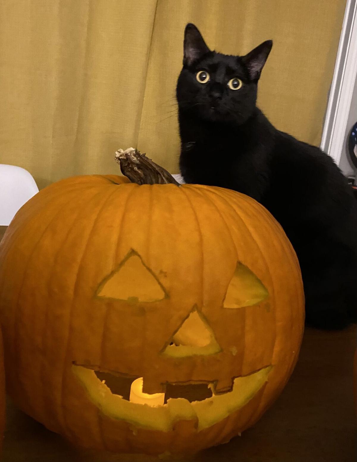 Black Cat Bash