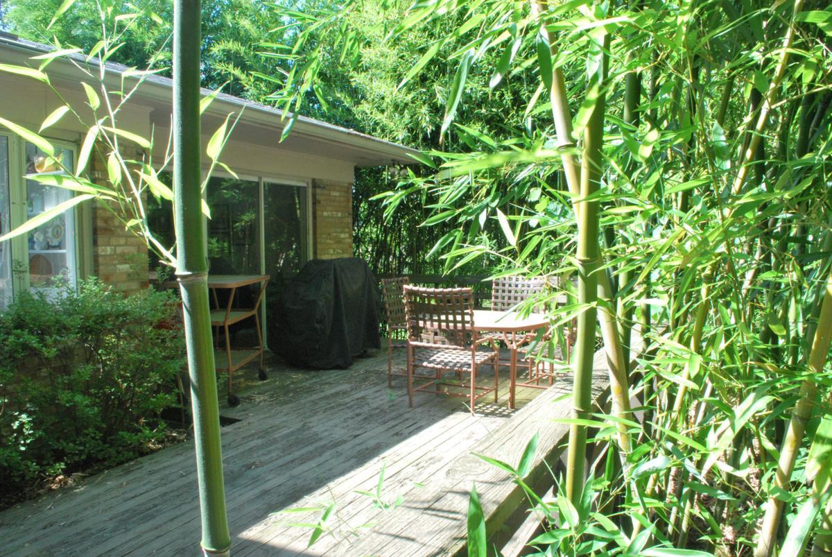 When Neighbor S Plants Invade Home Amp Garden Daily