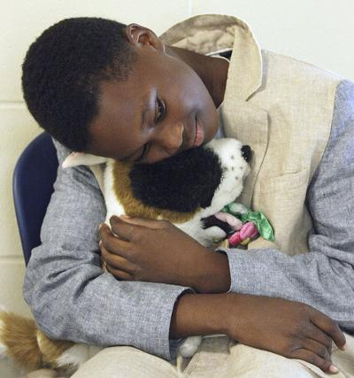Adopt A Stuffed Animal To Help A Real One Local News Daily