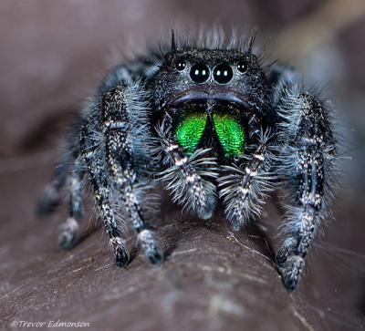 Spider watching